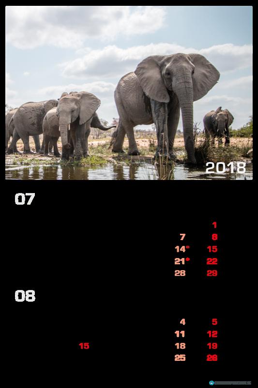 Calendrier Animaux 6 Feuillets Calendrier Illustr 233 2018